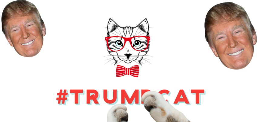 Image result for kittenfeed trump